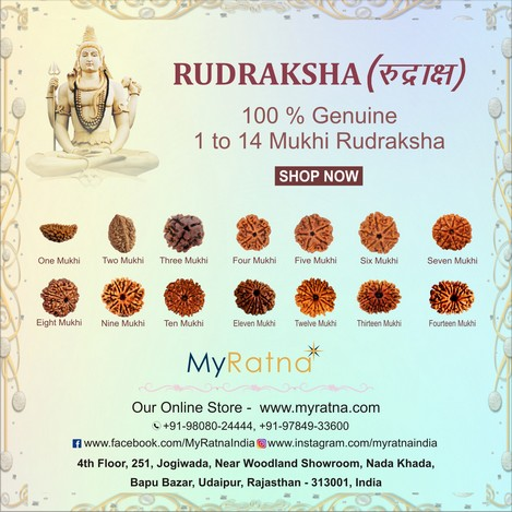 myratna-natural-rudraksha-1-mukhi-to-14-mukhi-in-india
